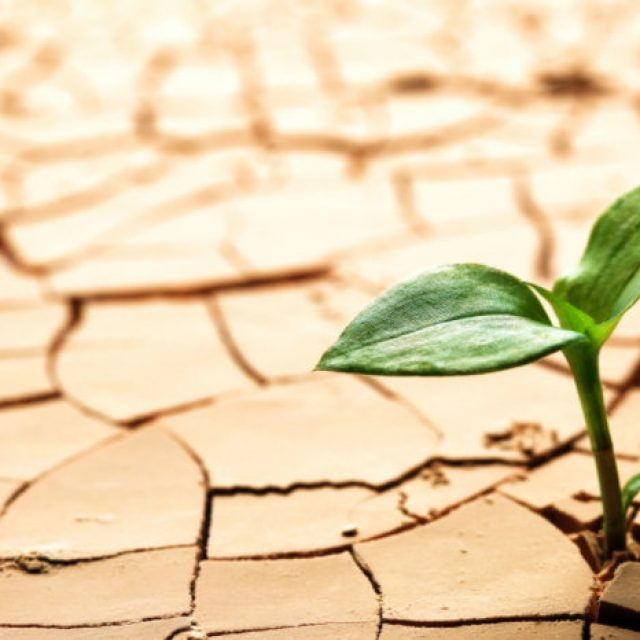 ODia Mundial de Combate à Desertificação e à Seca